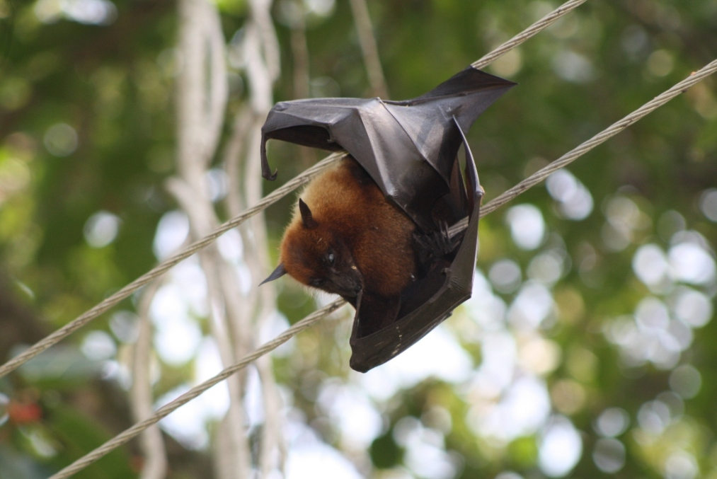 Nipah Virus causes