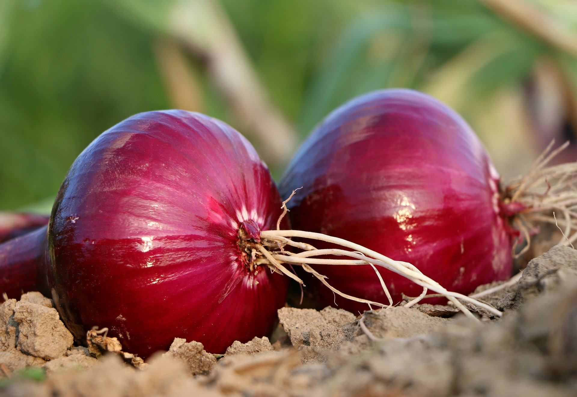 onion for hair problem solution